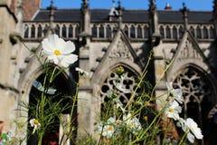 Flores em Dom Tower Garden (Utrecht - os Países Baixos) Imagens de Stock Royalty Free