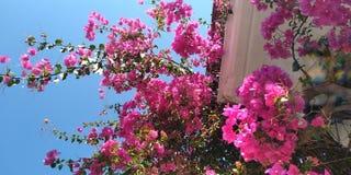 Flores em Grécia imagens de stock