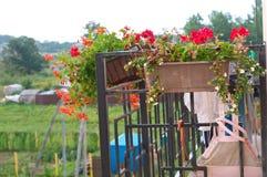Flores em pasta após a chuva, flores no balcão imagens de stock