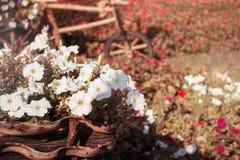 Flores em potenciômetros Imagens de Stock Royalty Free