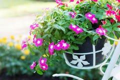 Flores em potenciômetros no jardim Imagens de Stock Royalty Free