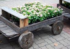 Flores em potenciômetros na caixa de madeira Imagens de Stock Royalty Free