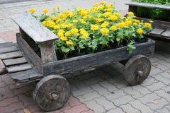 Flores em potenciômetros na caixa de madeira Foto de Stock Royalty Free