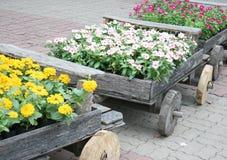 Flores em potenciômetros na caixa de madeira Fotos de Stock