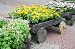 Flores em potenciômetros na caixa de madeira Imagem de Stock