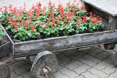 Flores em potenciômetros na caixa de madeira Imagem de Stock Royalty Free