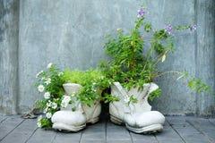 Flores em sapatas dos potenciômetros Fotos de Stock