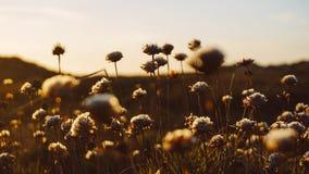 Flores em um campo Foto de Stock