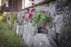 Flores em um churyard Foto de Stock