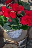 Flores em um coto de árvore Fotos de Stock Royalty Free