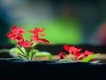 Flores em um flowerpot Fotos de Stock Royalty Free