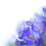Flores em um fundo branco Fotografia de Stock Royalty Free