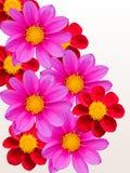 Flores em um fundo branco Foto de Stock