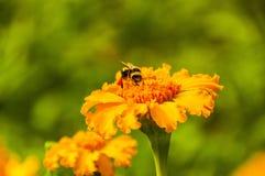 Flores em um fundo do céu, as flores na cidade, as flores bonitas, cores Imagem de Stock Royalty Free