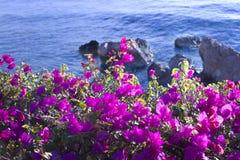Flores em um fundo do mar azul Imagens de Stock Royalty Free