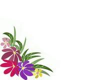 Flores em um fundo transparente Fotos de Stock Royalty Free