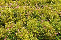 Flores em um jardim Imagens de Stock