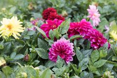 Flores em um jardim espanhol imagem de stock