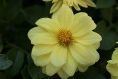 Flores em um jardim espanhol fotos de stock royalty free
