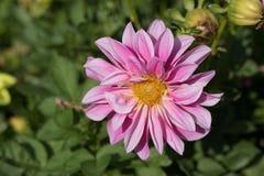 Flores em um jardim espanhol imagens de stock
