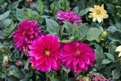 Flores em um jardim espanhol imagem de stock royalty free