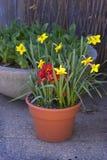 Flores em um potenciômetro Imagem de Stock