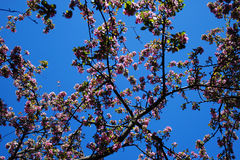 Flores em uma árvore Imagem de Stock