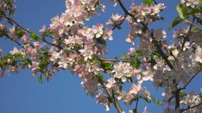 Flores em uma árvore de florescência video estoque