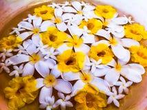 Flores em uma bacia de água Fotografia de Stock Royalty Free