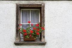 Flores em uma caixa de janela Imagens de Stock Royalty Free