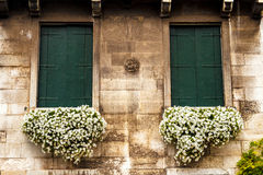 Flores em uma caixa na janela Fachada Venetian Imagem de Stock Royalty Free