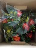 Flores em uma caixa imagens de stock royalty free