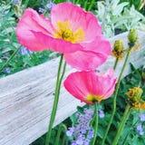 Flores em uma caminhada Fotografia de Stock