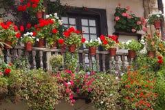 Flores em uma casa Foto de Stock Royalty Free