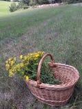 Flores em uma cesta imagem de stock royalty free