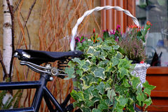 Flores em uma cesta Imagens de Stock Royalty Free