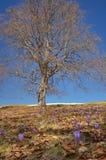Flores em uma floresta da faia Foto de Stock