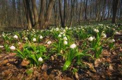 Flores em uma floresta da mola Fotos de Stock