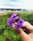 Flores em uma mão fotografia de stock royalty free