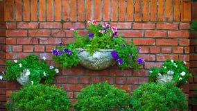 Flores em uma parede de tijolo Foto de Stock Royalty Free