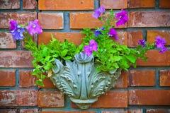 Flores em uma parede de tijolo Fotos de Stock Royalty Free