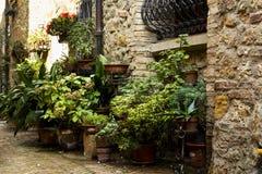 Flores em uma rua velha em uma cidade de Toscânia Foto de Stock Royalty Free