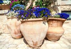 Flores em uns jarros Imagens de Stock