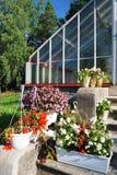 Flores em uns potenciômetros ao lado de uma estufa Fotografia de Stock