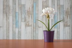 Flores em uns potenciômetros pequenos em uma tabela Imagem de Stock Royalty Free