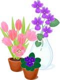 Flores em uns potenciômetros Fotografia de Stock