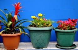 Flores em uns potenciômetros Fotos de Stock Royalty Free