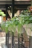 Flores em uns potenciômetros de flor em seguido Fotografia de Stock
