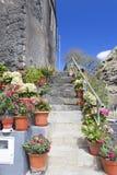 Flores em uns potenciômetros em uma escadaria em Madeira Fotografia de Stock