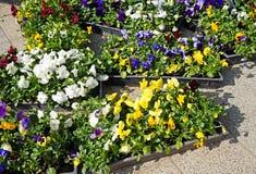 Flores em uns potenciômetros exteriores Foto de Stock Royalty Free